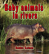 Baby animals in rivers (eBook)