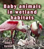 Baby animals in wetland habitats