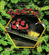 The Life Cycle of a Beetle (eBook)