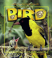 The Life Cycle of a Bird (eBook)