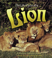 The Life Cycle of a Lion