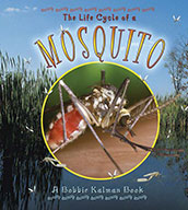 The Life Cycle of a Mosquito (eBook)