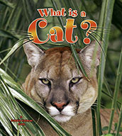 What is a Cat? (eBook)