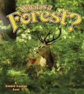 What is a Forest?