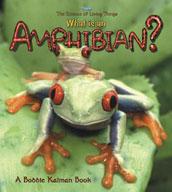 What is an Amphibian?