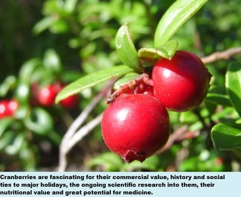 CRANBERRIES FUN READING AND SCIENCE