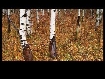 CRAZY Camouflage - Wild Animals