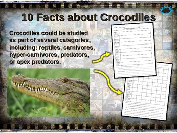 CROCODILES: 10 facts. Fun, engaging PPT (w links & free graphic organizer)