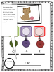 CVC Words - Visual Support for Segmenting, Hearing & Recording Sounds
