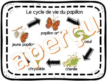 CYCLE DE VIE DU PAPILLON - IMPRIMABLE - FRENCH FSL FLI