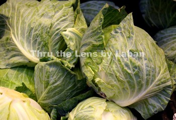 Cabbage Stock Photo #57