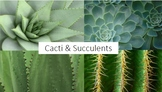 Cacti and Succulent Photobank for Drawing and Painting