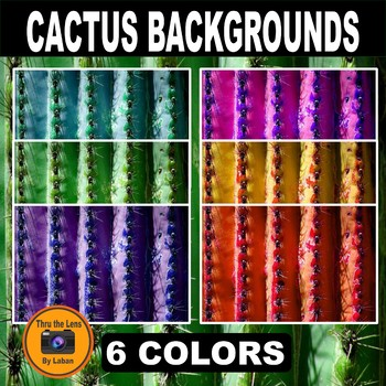 Cactus Photo Backgrounds #100