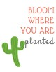 Cactus Posters for Classroom!