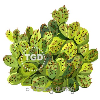 image relating to Cactus Printable known as Cactus - cactus clip artwork, cactus Printable Tracey Gurley Patterns