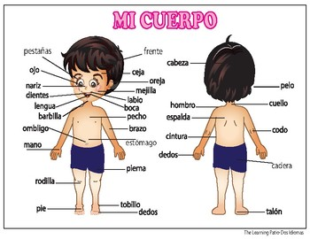 Cada parte del cuerpo posters Body Parts posters 4 Spanish 4 English