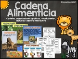 Cadena Alimenticia - Spanish Food Chain