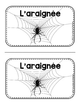 Cahier de recherche sur les araignées
