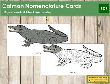 Caiman Nomenclature Cards