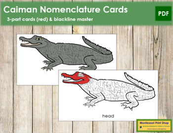 Caiman Nomenclature Cards (Red)
