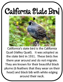 California State History Unit.  34 Pages!!  Geography US History