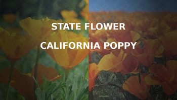 California State Symbols PowerPoint