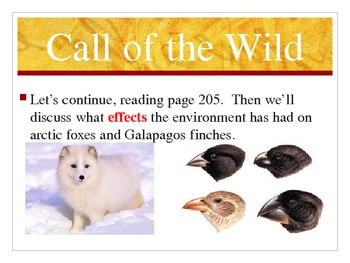 Call of the Wild - Treasures Reading Program Third Grade - Cause and Effect