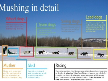 Call of the Wild by Jack London PowerPoint on a Dog Sled