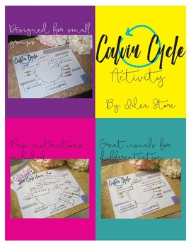 Calvin Cycle Interactive Activity