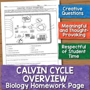 Calvin Cycle Overview Biology Homework Worksheet