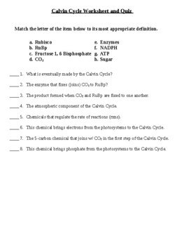 Calvin Cycle Worksheet and Quiz (with key)