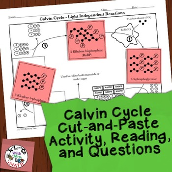 Photosynthesis Activity: Calvin Cycle Cut and Paste Activity