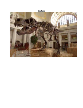 Cam Jansen and the Mystery of the Dinosaur Bones Book Study