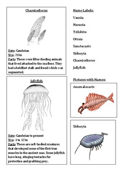 Cambrian Period 3 Part Cards