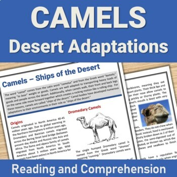 Camel Adaptations - Ships of the Desert - Readings and Comprehension