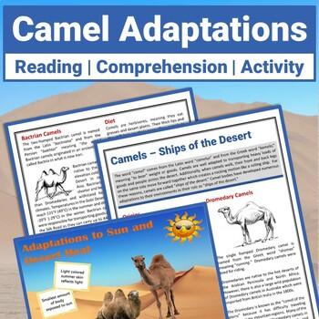 Primary homework help camel adaptation