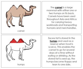 Camel Nomenclature Book (Red)