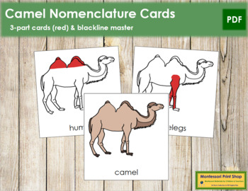 Camel Nomenclature Cards (Red)
