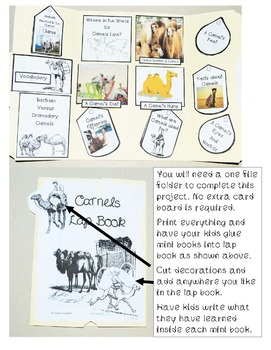 All About Camels