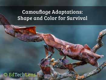 Camouflage Adaptations: Shape and Color for Survival (PDF)