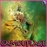 Camouflage: Animal Adaptations - PowerPoint & Activities