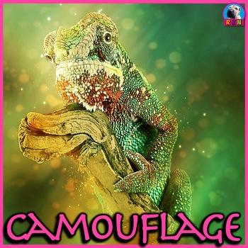 Camouflage: Animal Adaptations - PowerPoint & Activities