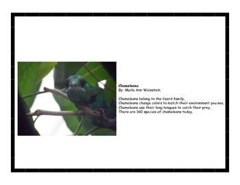 Camouflage Animals Activity Pack Bundle