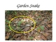 Camouflage Animals: Can you find them? PPT Freebie!