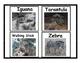 Camouflage Animals Flashcards
