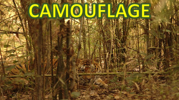 Camouflage - PowerPoint