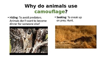 Camouflage Powerpoint Innovating Score on observation