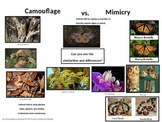 Camouflage vs Mimicry