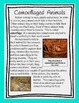 Camouflaged Animals: An Animal Adaptation Informational Text