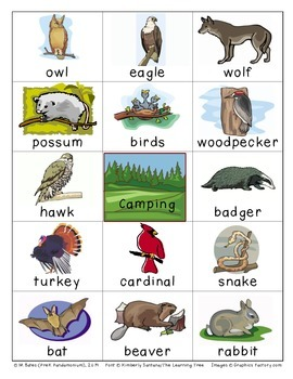 Camping Forest Flashcards Theme Words Poster Vocabulary Pictionary